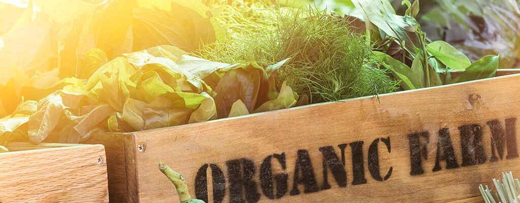 Why an Organic Lifestyle is the New Glam
